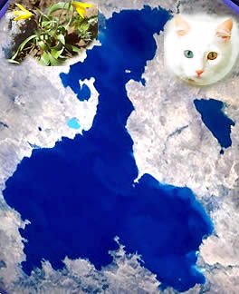 The Lake Van, The Van Cat and The Van Tulip